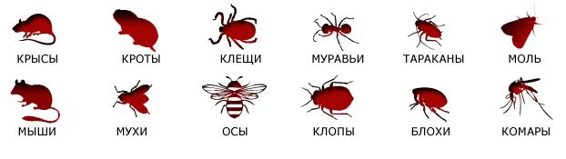 Дезинсекция в Томске. БИО-СЕРВИС